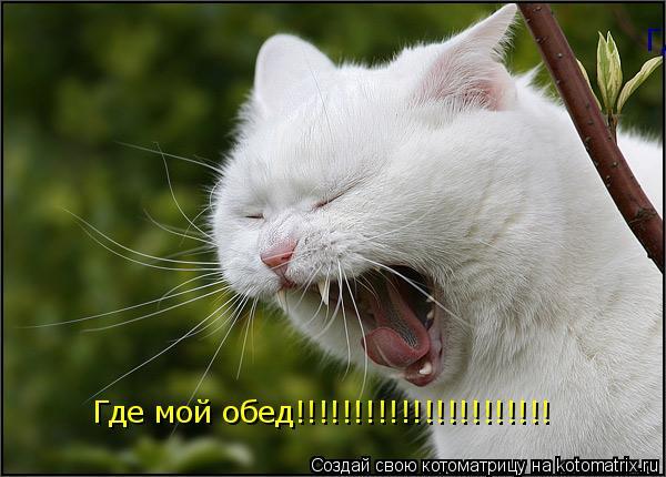 Котоматрица: Где мой обед!!!!!!!!!!!!!!!!!!!!!! Где мой обед!!!!!!!!!!!!!!!!!!!!!!