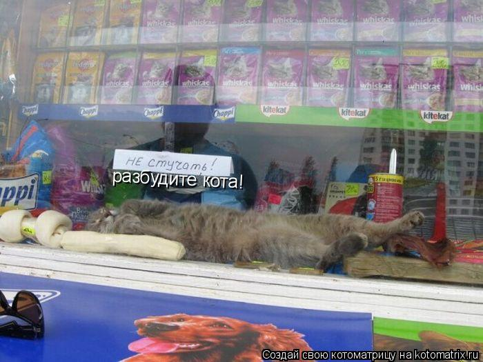 Котоматрица: разбудите кота!