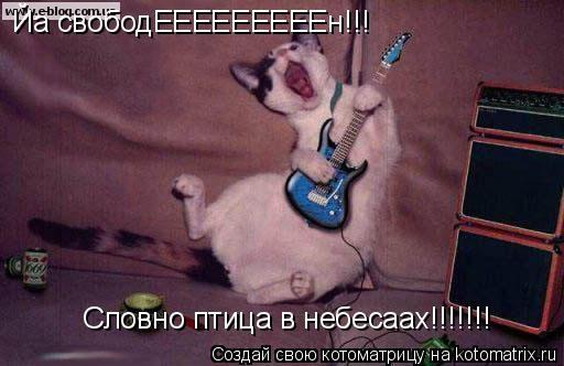 Котоматрица: Йа свободЕЕЕЕЕЕЕЕЕн!!! Словно птица в небесаах!!!!!!!