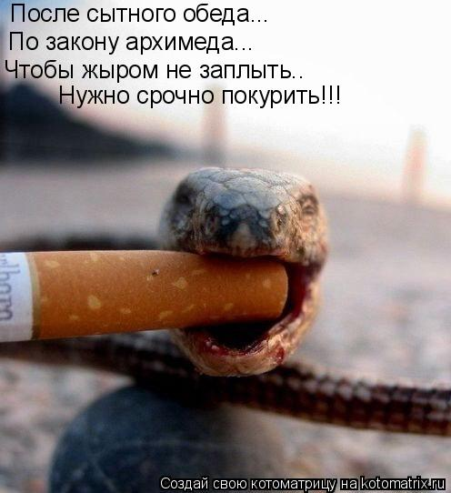 Котоматрица: После сытного обеда... По закону архимеда... Чтобы жыром не заплыть.. Нужно срочно покурить!!!