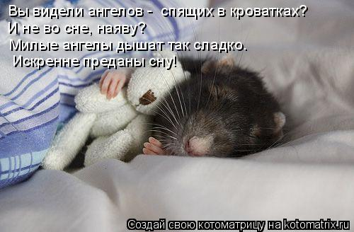 Котоматрица: Вы видели ангелов -  спящих в кроватках?   И не во сне, наяву?   Милые ангелы дышат так сладко.   Искренне преданы сну!