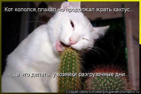 Котоматрица: Кот кололся,плакал,но продолжал жрать кактус... ...а что делать, у хозяйки разгрузочные дни...