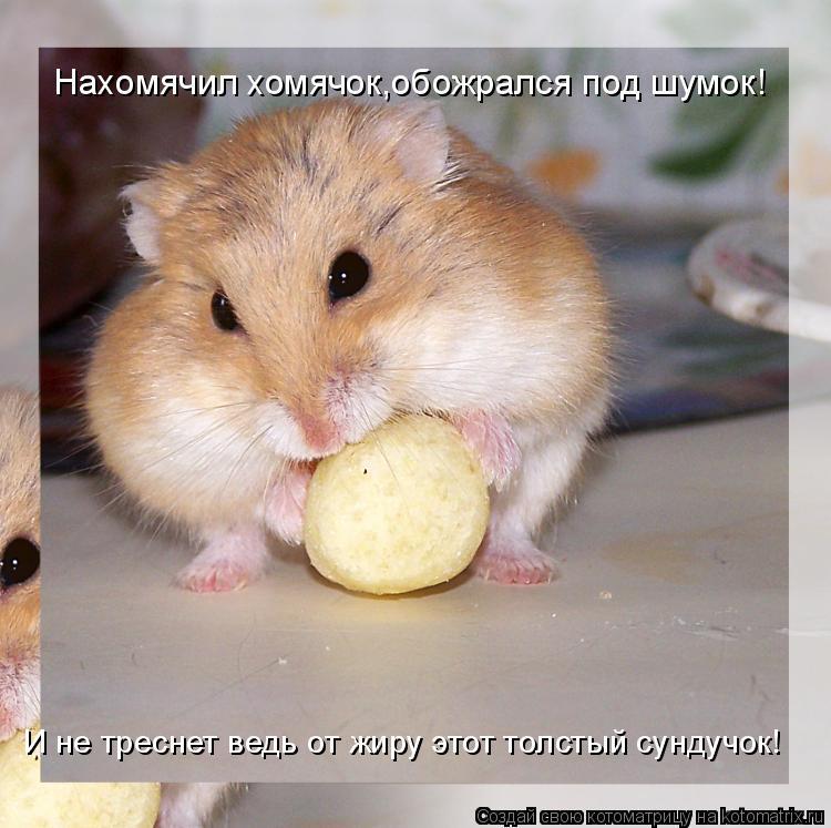 Котоматрица: Нахомячил хомячок,обожрался под шумок! И не треснет ведь от жиру этот толстый сундучок!