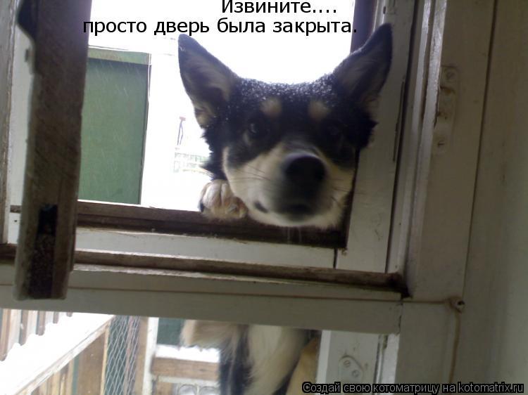 Котоматрица: Извините....  просто дверь была закрыта.