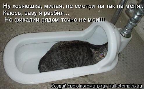 Котоматрица: Ну хозяюшка, милая, не смотри ты так на меня... Каюсь, вазу я разбил...  Но фикалии рядом точно не мои!!!