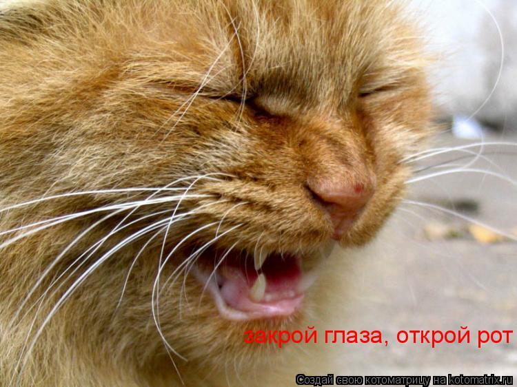 Котоматрица: закрой глаза, открой рот
