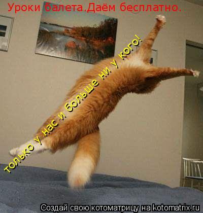 Котоматрица: Уроки балета.Даём бесплатно. только у нас и больше ни у кого!