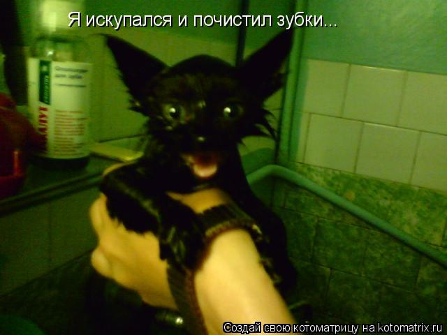 Котоматрица: Я искупался и почистил зубки...