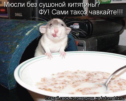 Котоматрица: Мюсли без сушоной китятины? ФУ! Сами такоэ чавкайте!!!