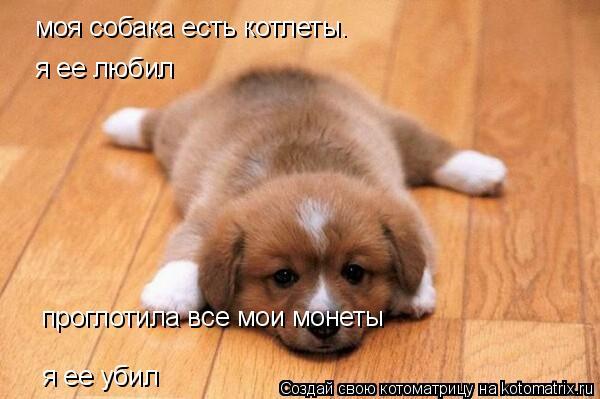 Котоматрица: моя собака есть котлеты.  я ее любил проглотила все мои монеты я ее убил