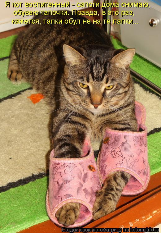Котоматрица: Я кот воспитанный - сапоги дома снимаю, обуваю тапочки. Правда, в это раз, кажется, тапки обул не на те лапки...