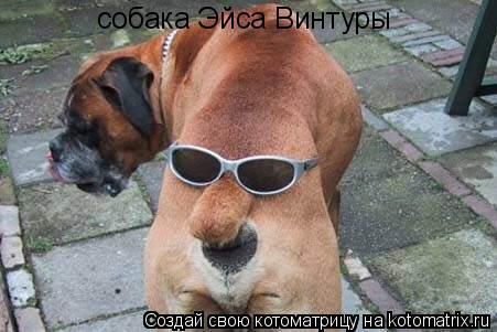 Котоматрица: собака Эйса Винтуры
