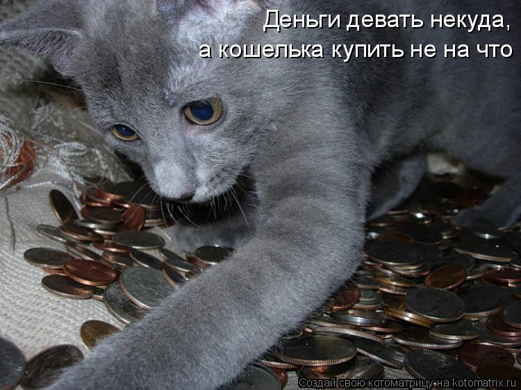 Котоматрица: Деньги девать некуда,  а кошелька купить не на что
