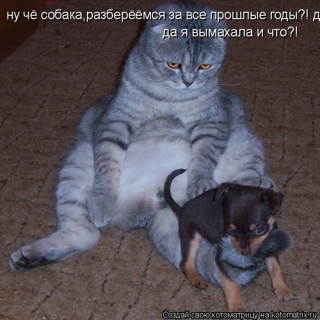 Котоматрица: ну чё собака,разберёёмся за все прошлые годы?! да я вымахала и что?!  да я вымахала и что?!