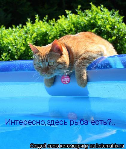 Котоматрица: Интересно,здесь рыба есть?..