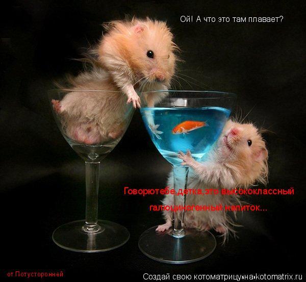 Котоматрица: Ой! А что это там плавает? Говорютебе,детка,это высококлассный галюциногенный напиток... от Потусторонней