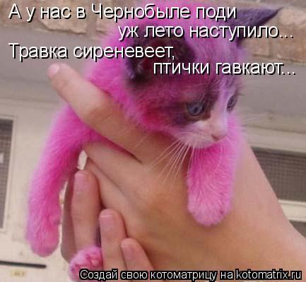 Котоматрица: А у нас в Чернобыле поди  уж лето наступило... Травка сиреневеет, птички гавкают...