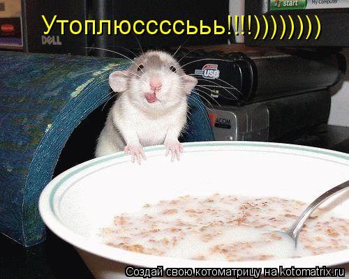 Котоматрица: Утоплюссссььь!!!!))))))))