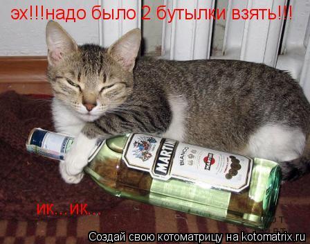 Котоматрица: эх!!!надо было 2 бутылки взять!!! ик...ик...