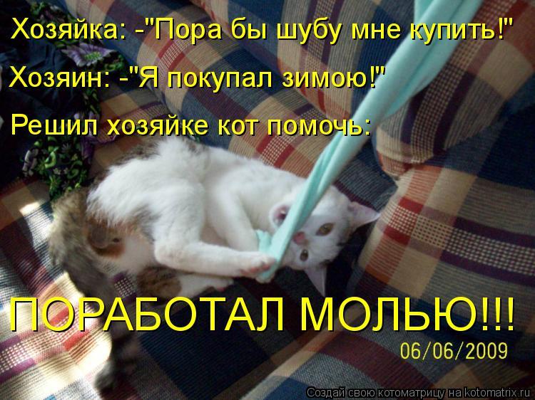 """Котоматрица: Хозяйка: -""""Пора бы шубу мне купить!"""" Хозяин: -""""Я покупал зимою!"""" Решил хозяйке кот помочь: ПОРАБОТАЛ МОЛЬЮ!!!"""