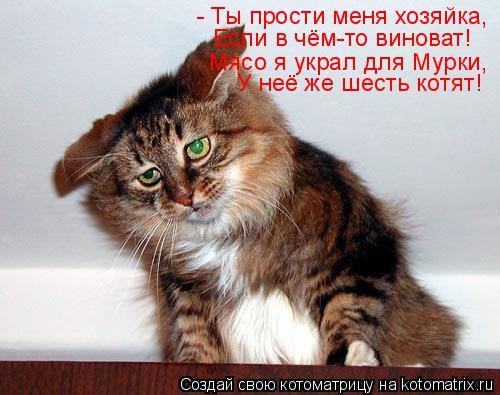 Котоматрица: - Ты прости меня хозяйка, Если в чём-то виноват! Мясо я украл для Мурки, У неё же шесть котят!