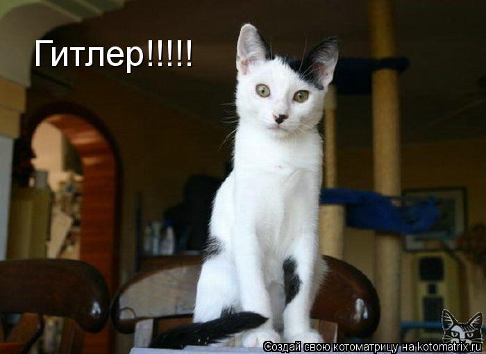 Котоматрица: Гитлер!!!!!
