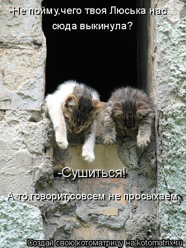Котоматрица: -Не пойму,чего твоя Люська нас  сюда выкинула? -Сушиться! А то,говорит,совсем не просыхаем.