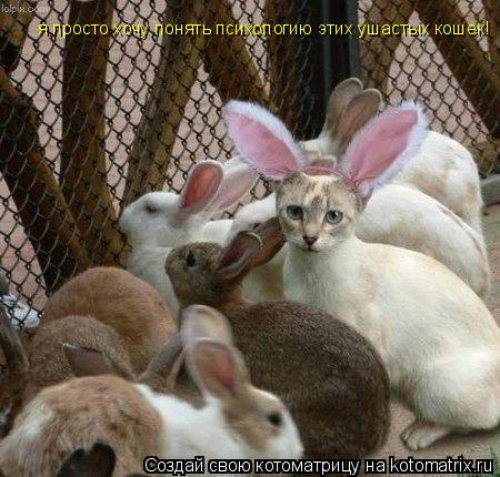 Котоматрица: я просто хочу понять психологию этих ушастых кошек!