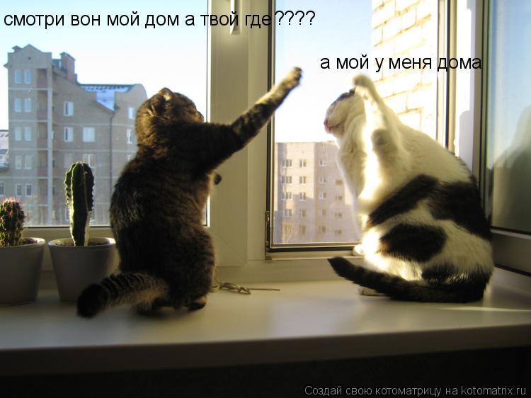 Котоматрица: смотри вон мой дом а твой где ???? а мой у меня дома