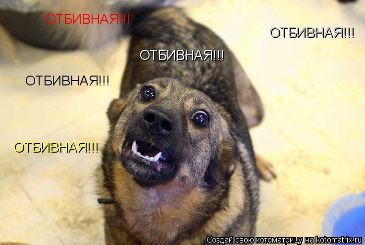 Котоматрица: ОТБИВНАЯ!!! ОТБИВНАЯ!!! ОТБИВНАЯ!!! ОТБИВНАЯ!!! ОТБИВНАЯ!!!