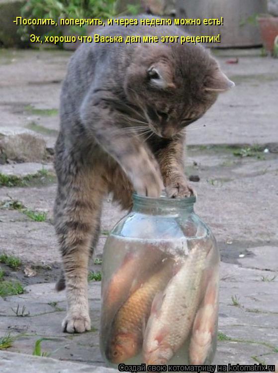 Котоматрица: -Посолить, поперчить, и через неделю можно есть! Эх, хорошо что Васька дал мне этот рецептик!