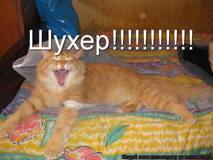 Котоматрица: Шухер!!!!!!!!!!!