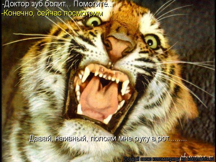 Котоматрица: -Доктор зуб болит... Помогите... -Конечно, сейчас посмотрим Давай, наивный, положи мне руку в рот.........