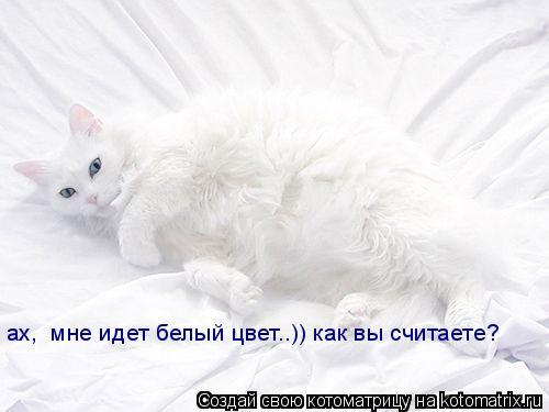 Котоматрица: ах,  мне идет белый цвет..)) как вы считаете?