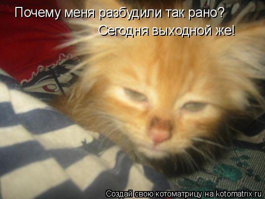 Котоматрица: Почему меня разбудили так рано? Сегодня выходной же!