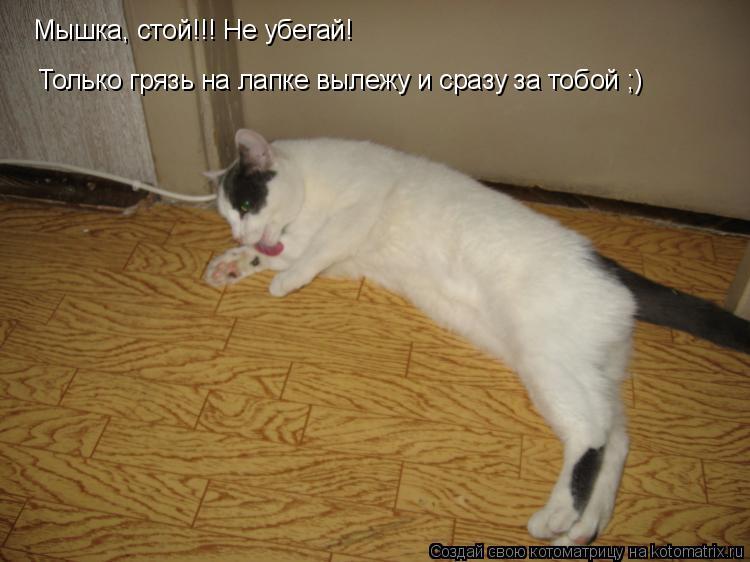 Котоматрица: Мышка, стой!!! Не убегай! Только грязь на лапке вылежу и сразу за тобой ;)