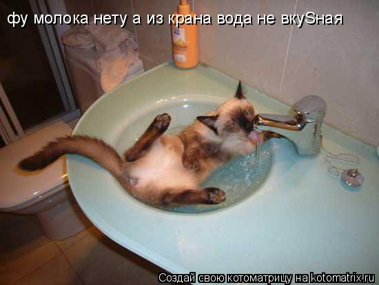 Котоматрица: фу молока нету а из крана вода не вкуSнaя