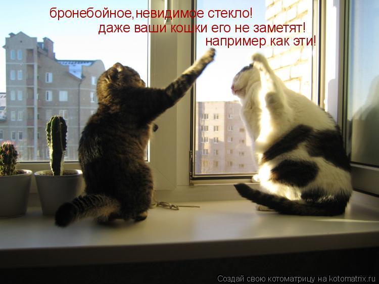 Котоматрица: бронебойное,невидимое стекло! даже ваши кошки его не заметят! например как эти!