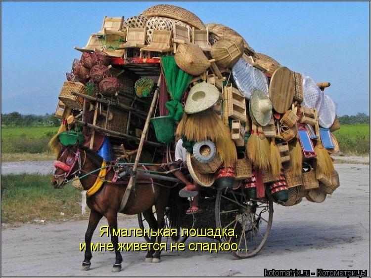 Котоматрица: Я маленькая лошадка, и мне живется не сладкоо...