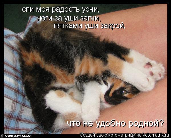 Котоматрица: спи моя радость усни, ноги за уши загни, пятками уши закрой, что не удобно родной?
