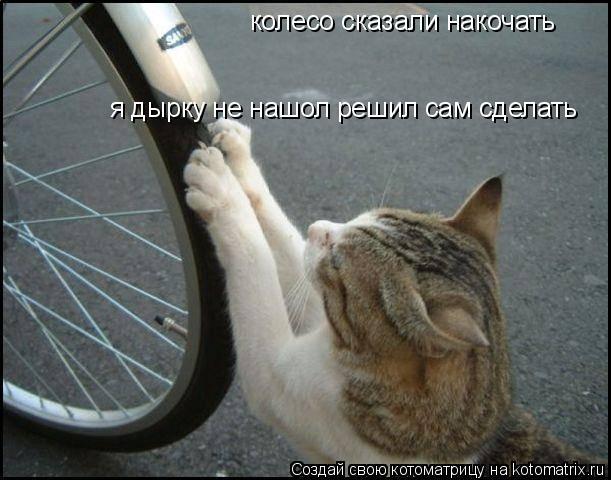 Котоматрица: колесо сказали накочать  я дырку не нашол решил сам сделать