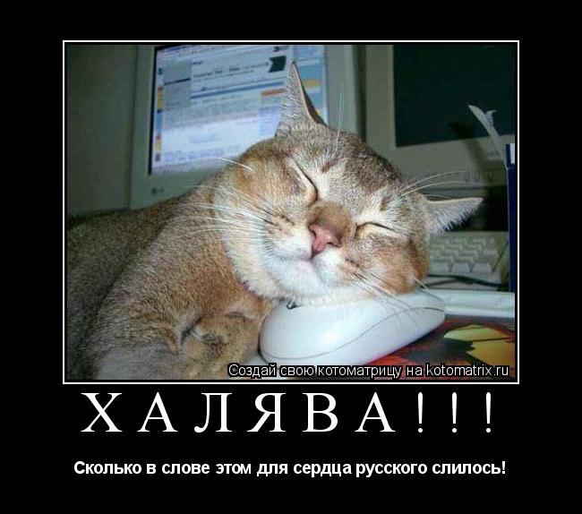 Котоматрица: ХАЛЯВА!!! Сколько в слове этом для сердца русского слилось!