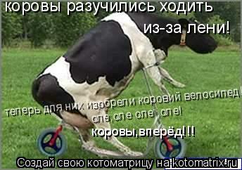 Котоматрица: коровы разучились ходить  из-за лени! теперь для них изобрели коровий велосипед!! оле,оле оле ,оле! коровы,вперёд!!!