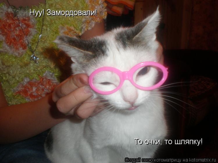 Котоматрица: Нуу! Замордовали! То очки, то шляпку!