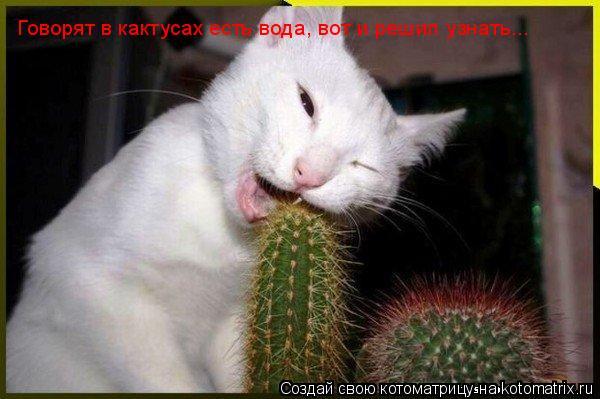 Котоматрица: Говорят в кактусах есть вода, вот и решил узнать...