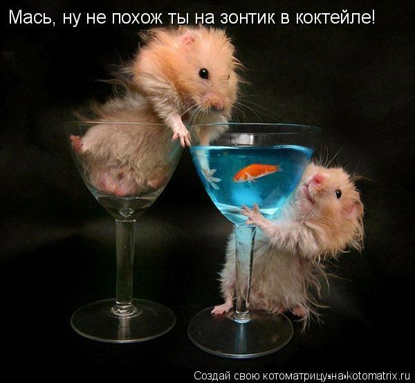 Котоматрица: Мась, ну не похож ты на зонтик в коктейле!