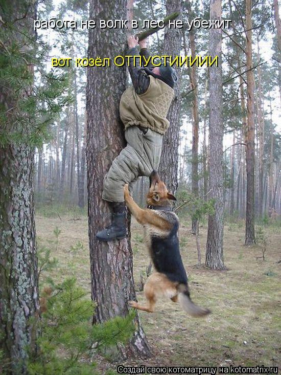 Котоматрица: работа не волк в лес не убежит вот козёл ОТПУСТИИИИИ