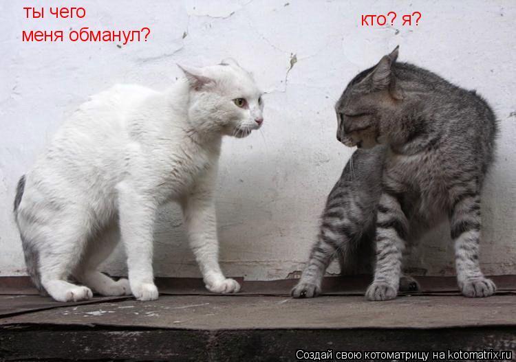 Котоматрица: ты чего меня обманул? кто? я?