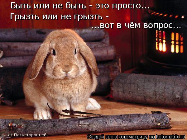 Котоматрица: Быть или не быть - это просто... Грызть или не грызть -  ...вот в чём вопрос... от Потусторонней.