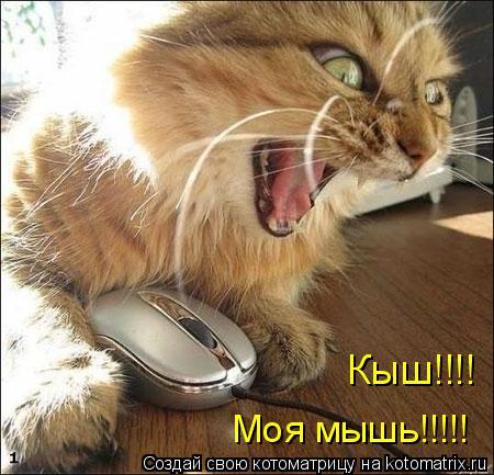 Котоматрица: Моя мышь!!!!! Кыш!!!!